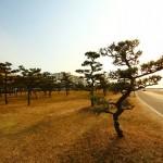 自然樹形と人口樹形