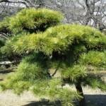 庭木に適している樹木